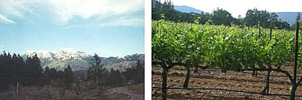 Mt St Helena  and Middletown Vineyards
